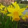 150309_Garden_coming_to_life_1.jpg
