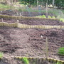 veg plots ready to plant