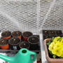 veg seeds begining to sprout
