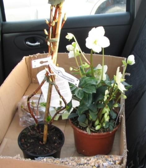 The best back seat passengers