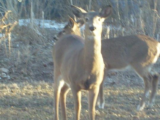 back yard friends