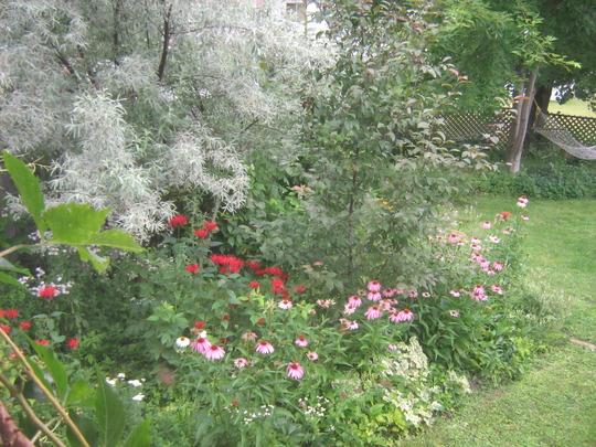 north fencewall of my garden.
