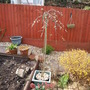 Salix Caprea 'Kilenock'