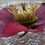 2009_0316birdsgarden0006