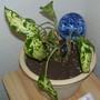 Calvins birth plant.