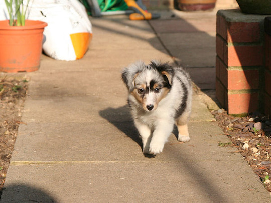 Sienna takes to the garden for the 1st time @ 7 weeks