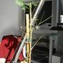 Poke the Purple Fernleaf Acacia (Acacia baileyana (Cootamundra wattle))
