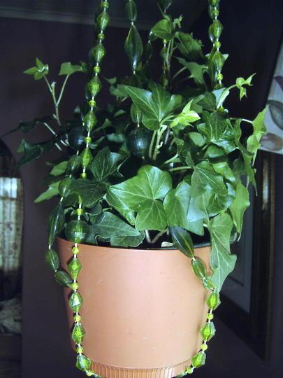 Needlepoint Ivy (Hedera Helix 'Needlepoint') (Hedera helix 'Needlepoint')
