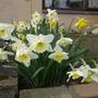 Spring has arrived around patio