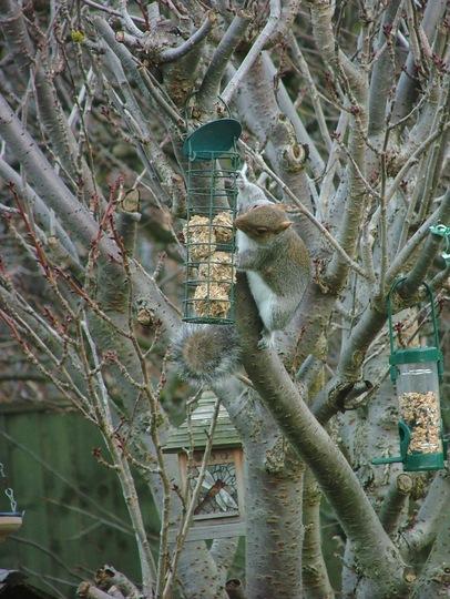 Caught you stealing the bird food!