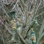 Squirrel_yum_