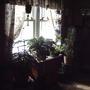 Dining room plant window