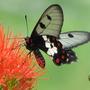 Butterfly_20