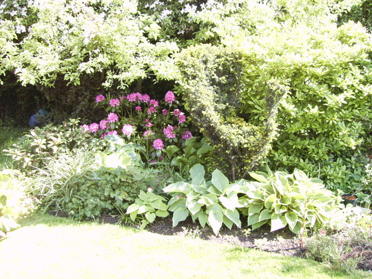 Rhododendrons and hostas (Rhododendron)
