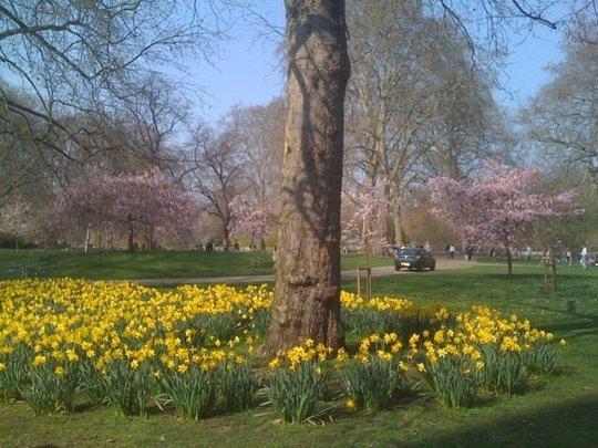St James Park in bloom