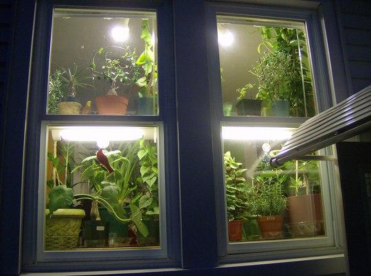 Plant Windows.