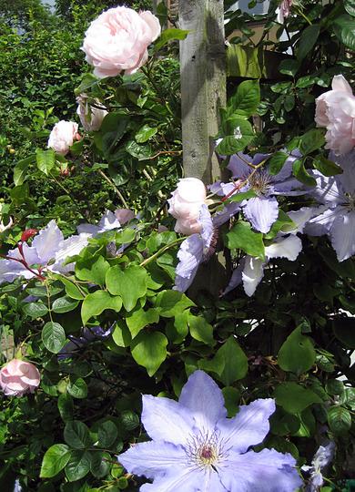 Archway Scramble - generous gardener