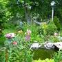 growing fish food-Secret Garden.