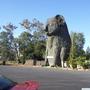 Koala from Down Under Australia