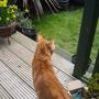 Butch - the garden 'helper'