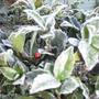 garden_1.03.08_001.jpg