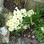 garden_1.03.08_011.jpg