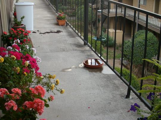 Balcony with birdfeeder.