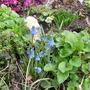 garden_1.03.08_012.jpg
