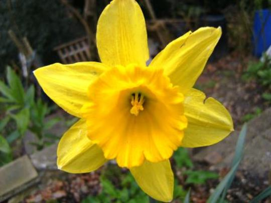 Whats my name? (Narcissus)