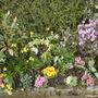 Front garden (rhododendron Praecox)