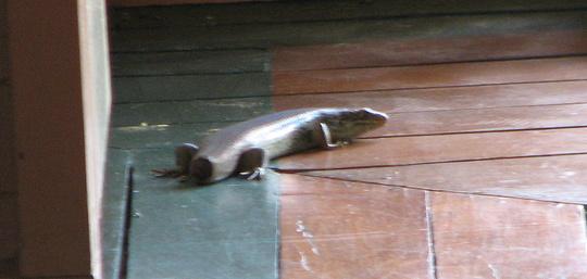 Strange visitor - about 50 cms long