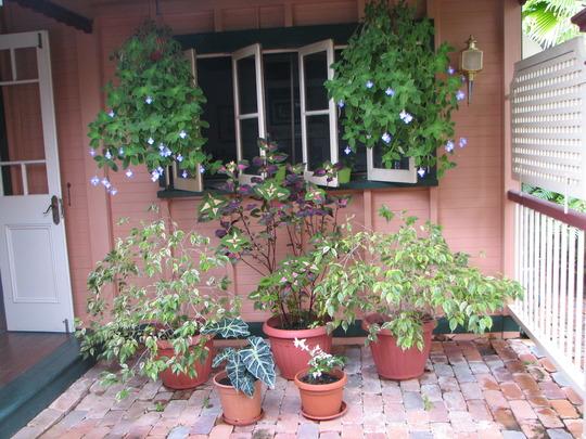 'Lots of pots spot' is taking shape