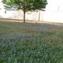 Wildflowers and tree.