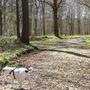 my strange dog in Bishop woods