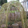 Willow Dome 02 Mar 08 (Salix)