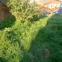 """Front garden """"before"""" 1"""