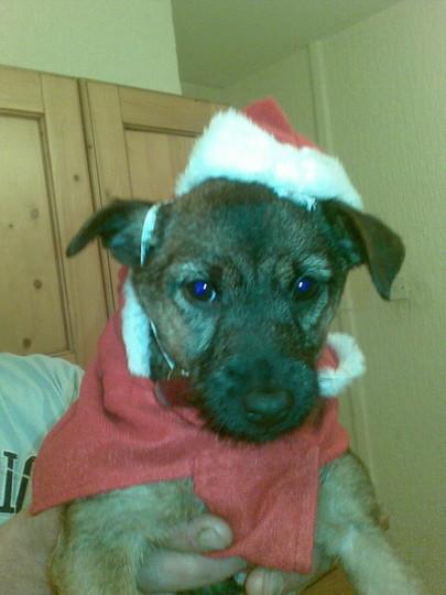 Not a very happy Santa's helper