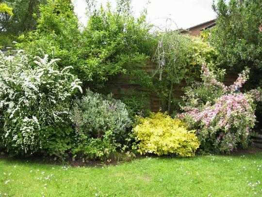 Garden June 2005 (weigela spirea)