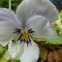Summer_garden_2008_finn_and_popps_1010