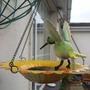 New_bird_feeder