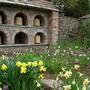 Frittilaria and Daffodils