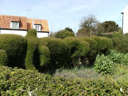 Elephant hedge
