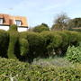 Elephant hedge