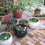 Autumn in Oz - finished the first round of potting up my flowers for the year