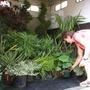 pip_plants.jpg
