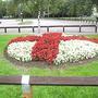 Begonias__English_flag_._Riverside_park__H_don_2_Sep.06__Small_.jpg