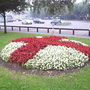 Begonias_red___white_cross_16-09-06.jpg