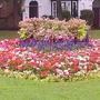 Flower_bed_near_Huntingdon_bus_station_29-09-07.jpg