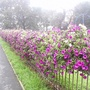 Flower_beds_on_H_don_ring_road_13-09-08_027.jpg