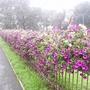 Flower_beds_on_H_don_ring_road_13-09-08_027.jpg